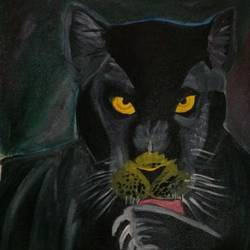 black panther, 13 x 15 inch, k shwetha bhat,13x15inch,canvas,paintings,wildlife paintings,paintings for living room,paintings for bedroom,acrylic color,GAL01655828420