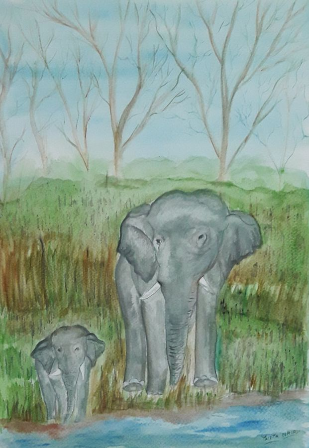 the elephant's trail, 12 x 17 inch, tripta nair,12x17inch,brustro watercolor paper,paintings,wildlife paintings,elephant paintings,watercolor,GAL01718928432