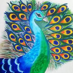 peacock, 11 x 14 inch, lalit kandpal,11x14inch,cloth,paintings,wildlife paintings,animal paintings,paintings for dining room,paintings for living room,paintings for bedroom,paintings for office,paintings for school,acrylic color,GAL01729028515