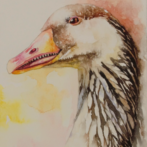goose , 5 x 8 inch, anjana  sihag,5x8inch,paper,paintings,wildlife paintings,paintings for dining room,paintings for living room,paintings for office,paintings for hotel,paintings for school,watercolor,paper,GAL01579428940