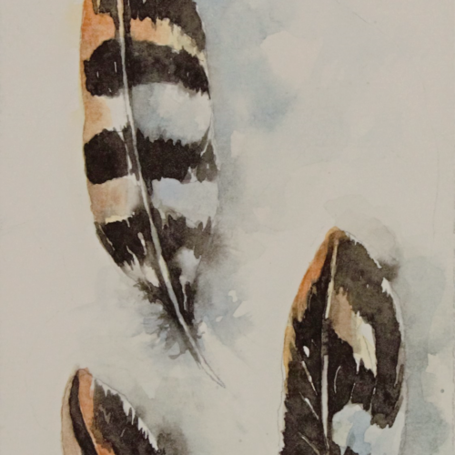 freedom , 4 x 8 inch, anjana  sihag,4x8inch,brustro watercolor paper,wildlife paintings,nature paintings | scenery paintings,minimalist paintings,paintings for dining room,paintings for living room,paintings for bedroom,paintings for office,paintings for kids room,paintings for hotel,paintings for kitchen,paintings for dining room,paintings for living room,paintings for bedroom,paintings for office,paintings for kids room,paintings for hotel,paintings for kitchen,watercolor,GAL01579428941
