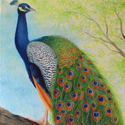 peacock sitting on tree, 24 x 36 inch, goutami mishra,24x36inch,canvas,paintings,wildlife paintings,landscape paintings,nature paintings | scenery paintings,art deco paintings,impressionist paintings,photorealism paintings,photorealism,realism paintings,animal paintings,contemporary paintings,paintings for dining room,paintings for living room,paintings for bedroom,paintings for office,paintings for kids room,paintings for hotel,paintings for school,oil color,GAL046528961