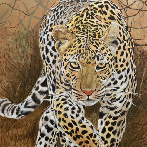 leopard , 30 x 40 inch, suman  chawla ,30x40inch,canvas,paintings,wildlife paintings,paintings for dining room,paintings for living room,paintings for bedroom,paintings for office,paintings for kids room,paintings for hotel,paintings for school,acrylic color,GAL01767429038