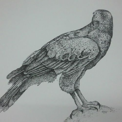 a pair of eagle's , 14 x 11 inch, syed akheel,fine art drawings,wildlife paintings,paintings for living room,thick paper,ink color,14x11inch,GAL011352944