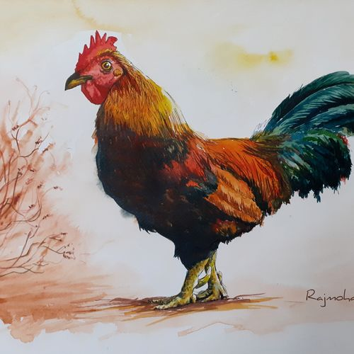 rooster, 16 x 11 inch, rajmohan ramamoorthi,16x11inch,canvas,paintings,animal paintings,paintings for living room,paintings for office,paintings for hotel,paintings for school,paintings for hospital,pen color,watercolor,GAL01816129899