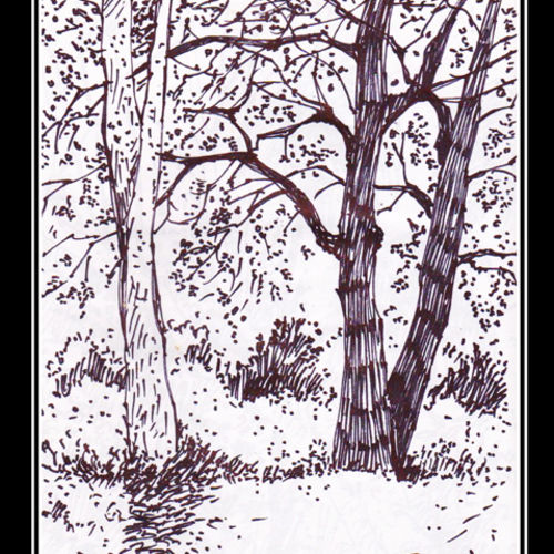 trees, 5 x 8 inch, siva raja,5x8inch,paper,drawings,figurative drawings,fine art drawings,folk drawings,paintings for dining room,paintings for living room,paintings for bedroom,paintings for office,paintings for hotel,paintings for hospital,pen color,paper,GAL01840230149