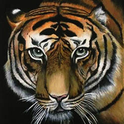 tiger, 12 x 17 inch, sonal sahai,12x17inch,canvas,paintings,wildlife paintings,animal paintings,realistic paintings,paintings for dining room,paintings for living room,paintings for bedroom,paintings for office,paintings for bathroom,paintings for hotel,oil color,GAL01867230757