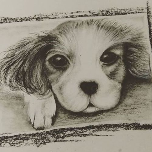 puppy, 17 x 12 inch, sonal sahai,17x12inch,thick paper,paintings for dining room,paintings for living room,paintings for bedroom,paintings for office,paintings for kids room,paintings for hotel,paintings for school,paintings for hospital,portrait drawings,paintings for dining room,paintings for living room,paintings for bedroom,paintings for office,paintings for kids room,paintings for hotel,paintings for school,paintings for hospital,charcoal,pencil color,paper,GAL01867230759