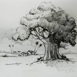 the tree, 14 x 14 inch, rajmohan ramamoorthi,14x14inch,thick paper,drawings,fine art drawings,illustration drawings,paintings for living room,paintings for office,paintings for kids room,paintings for hotel,paintings for kitchen,paintings for school,paintings for hospital,graphite pencil,GAL01816130777