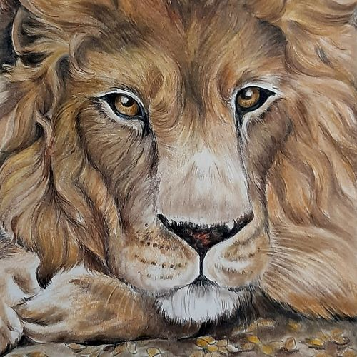 majestic , 11 x 12 inch, swaroop  venkataraman,11x12inch,canson paper,paintings,wildlife paintings,figurative paintings,realistic paintings,paintings for living room,paintings for kids room,paintings for hotel,pencil color,GAL01926630839