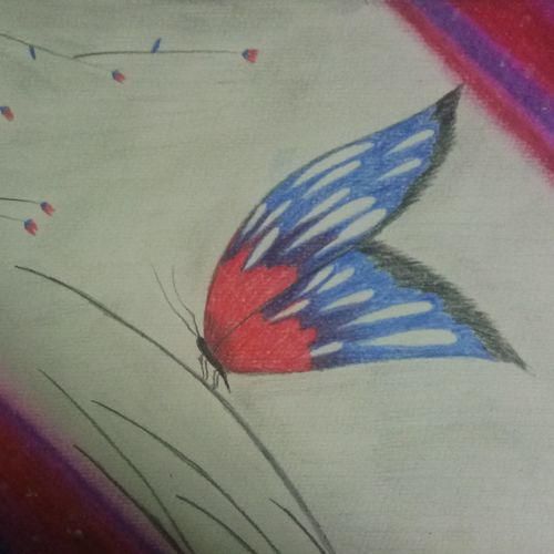 butterfly , 8 x 12 inch, sadaf anees antulay,8x12inch,thick paper,paintings,wildlife paintings,pencil color,GAL0527530876