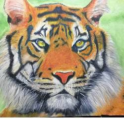 calming fury, 16 x 22 inch, jasmin j,16x22inch,canvas board,wildlife paintings,animal paintings,paintings for living room,paintings for office,paintings for hotel,paintings for living room,paintings for office,paintings for hotel,oil color,GAL01935330967