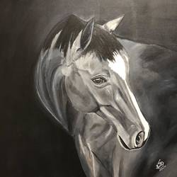 the infinite's of grey, 24 x 30 inch, preetha nair,24x30inch,canvas,paintings,wildlife paintings,animal paintings,horse paintings,paintings for dining room,paintings for living room,paintings for office,paintings for hotel,paintings for hospital,acrylic color,GAL01938531006