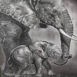 baby elephant with his mom, 16 x 23 inch, akila devi,16x23inch,drawing paper,drawings,paintings for dining room,paintings for living room,paintings for bedroom,paintings for office,paintings for bathroom,paintings for kids room,paintings for hotel,paintings for kitchen,paintings for school,paintings for hospital,fine art drawings,photorealism drawings,realism drawings,paintings for dining room,paintings for living room,paintings for bedroom,paintings for office,paintings for bathroom,paintings for kids room,paintings for hotel,paintings for kitchen,paintings for school,paintings for hospital,charcoal,paper,GAL01944831105