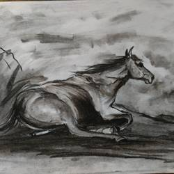 horse 1, 12 x 8 inch, shankhadeep  mondal,12x8inch,thick paper,drawings,fine art drawings,paintings for dining room,paintings for living room,paintings for bedroom,paintings for office,paintings for bathroom,paintings for kids room,paintings for hotel,paintings for kitchen,paintings for school,paintings for hospital,charcoal,GAL01403031222