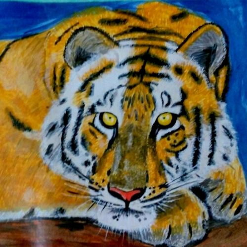 tiger eyes, 12 x 9 inch, nikhil kamble,paintings for living room,paintings,animal paintings,drawing paper,acrylic color,12x9inch,GAL012123152