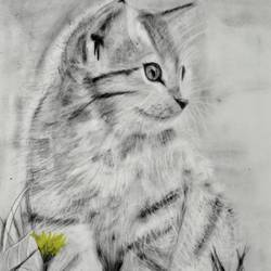 cat, 12 x 12 inch, sukanya pore,12x12inch,thick paper,drawings,fine art drawings,portrait drawings,realism drawings,paintings for dining room,paintings for living room,paintings for office,paintings for kids room,paintings for hotel,paintings for school,charcoal,paper,GAL01937631608
