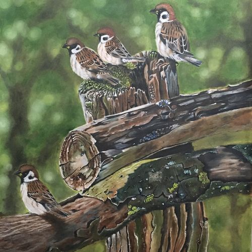 sparrow, 25 x 36 inch, ila  singh,25x36inch,canvas,paintings,wildlife paintings,figurative paintings,landscape paintings,modern art paintings,nature paintings | scenery paintings,abstract expressionism paintings,expressionism paintings,illustration paintings,impressionist paintings,photorealism paintings,photorealism,realism paintings,surrealism paintings,realistic paintings,love paintings,children paintings,paintings for dining room,paintings for bedroom,paintings for office,paintings for kids room,paintings for hotel,paintings for school,paintings for hospital,oil color,GAL0795931650