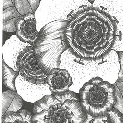 anemones, 9 x 11 inch, parijat joshi singhal,9x11inch,drawing paper,drawings,abstract drawings,illustration drawings,ink color,pen color,paper,GAL02000231709