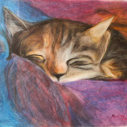 cute cat, 17 x 12 inch, alna poulose,17x12inch,paper,drawings,documentary drawings,figurative drawings,fine art drawings,photorealism drawings,paintings for dining room,paintings for living room,paintings for bedroom,paintings for office,paintings for kids room,paintings for hotel,paintings for kitchen,paintings for school,pencil color,paper,GAL02025031816