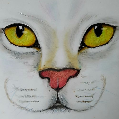 the cat - cute pet, 12 x 6 inch, vishal thakur,12x6inch,thick paper,paintings,animal paintings,realistic paintings,paintings for dining room,paintings for living room,paintings for bedroom,paintings for office,paintings for bathroom,paintings for kids room,paintings for hotel,paintings for kitchen,paintings for school,paintings for hospital,pastel color,watercolor,paper,GAL02044732057