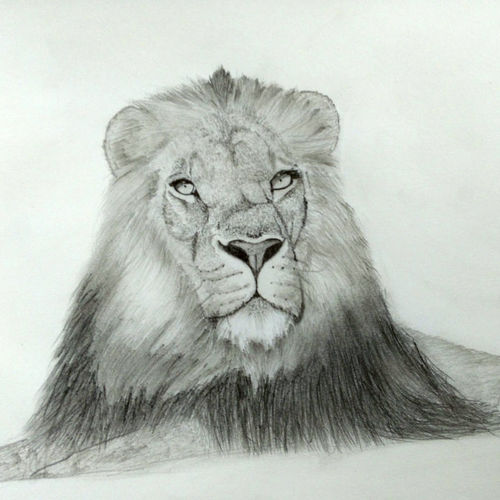 king lion, 10 x 12 inch, nikhil kamble,portrait drawings,paintings for living room,drawings,drawing paper,graphite pencil,10x12inch,GAL012123225