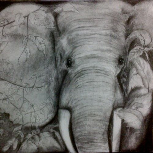 magnifying mammoth, 12 x 17 inch, arpana d,fine art drawings,paintings for living room,paper,charcoal,12x17inch,GAL09643243