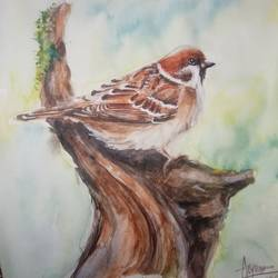 the sparrow , 8 x 10 inch, arya  maurya ,8x10inch,paper,fine art drawings,watercolor,GAL02070532443