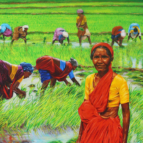 paddy cultivation, 30 x 25 inch, muralidhar suvarna,30x25inch,hardboard,paintings,landscape paintings,nature paintings   scenery paintings,acrylic color,GAL0456932564