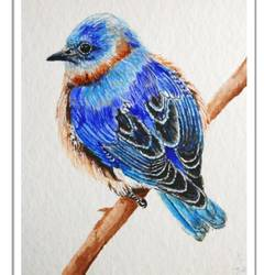 fluffy colourful bird in watercolour, 7 x 8 inch, vishala prasad,7x8inch,handmade paper,paintings,wildlife paintings,paintings for dining room,paintings for living room,paintings for bedroom,paintings for office,paintings for kids room,paintings for hotel,paintings for school,paintings for hospital,paintings for dining room,paintings for living room,paintings for bedroom,paintings for office,paintings for kids room,paintings for hotel,paintings for school,paintings for hospital,watercolor,GAL02123233310