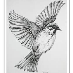 bird drawing  in pen and ink , 6 x 8 inch, vishala prasad,6x8inch,cartridge paper,drawings,fine art drawings,paintings for dining room,paintings for living room,paintings for bedroom,paintings for office,paintings for kids room,paintings for hotel,paintings for school,paintings for hospital,pen color,GAL02123233311