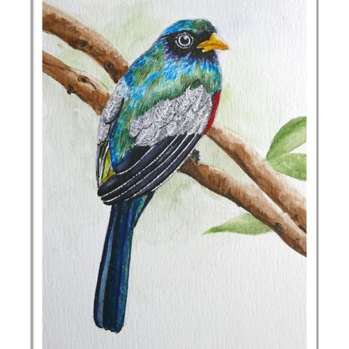 colourful bird, 6 x 8 inch, vishala prasad,6x8inch,brustro watercolor paper,paintings,wildlife paintings,paintings for dining room,paintings for living room,paintings for bedroom,paintings for office,paintings for kids room,paintings for hotel,paintings for school,paintings for hospital,paintings for dining room,paintings for living room,paintings for bedroom,paintings for office,paintings for kids room,paintings for hotel,paintings for school,paintings for hospital,watercolor,GAL02123233312