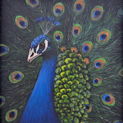 peacock, 12 x 16 inch, chinmay bahulekar,12x16inch,canvas,paintings,wildlife paintings,nature paintings | scenery paintings,animal paintings,realistic paintings,paintings for dining room,paintings for living room,paintings for bedroom,paintings for office,paintings for bathroom,paintings for kids room,paintings for hotel,paintings for kitchen,paintings for school,paintings for hospital,paintings for dining room,paintings for living room,paintings for bedroom,paintings for office,paintings for bathroom,paintings for kids room,paintings for hotel,paintings for kitchen,paintings for school,paintings for hospital,acrylic color,GAL0720433417