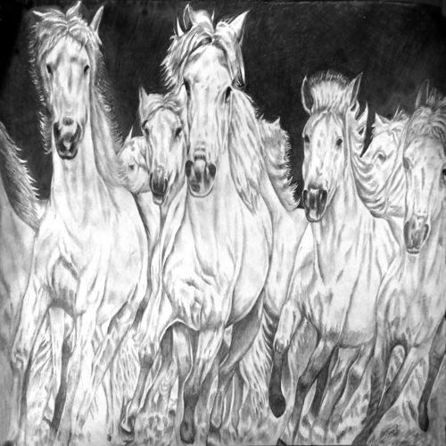 horses, 22 x 15 inch, ravi borade,illustration drawings,paintings for bedroom,horse paintings,thick paper,graphite pencil,22x15inch,GAL012433360