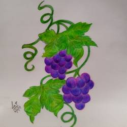 grapevine , 8 x 12 inch, lin taji,8x12inch,paper,drawings,art deco drawings,conceptual drawings,fine art drawings,illustration drawings,mixed media,pencil color,graphite pencil,paper,GAL02190033938
