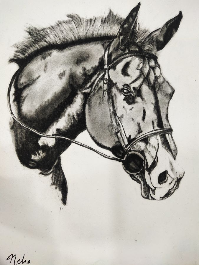 horse painting, 12 x 16 inch, neha mittal,12x16inch,drawing paper,paintings,wildlife paintings,ganesha paintings   lord ganesh paintings,charcoal,GAL02187433974