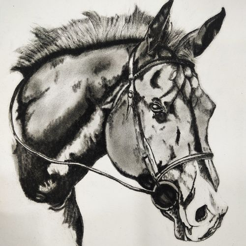 horse painting, 12 x 16 inch, neha mittal,12x16inch,drawing paper,paintings,wildlife paintings,ganesha paintings | lord ganesh paintings,charcoal,GAL02187433974