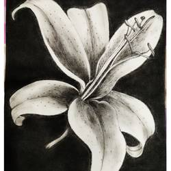object painting, 12 x 16 inch, neha mittal,12x16inch,drawing paper,paintings,flower paintings,charcoal,GAL02187433990