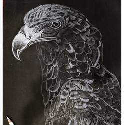 eagle art, 12 x 16 inch, neha mittal,12x16inch,drawing paper,paintings,wildlife paintings,pencil color,GAL02187433991