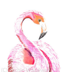flamingo, 18 x 25 inch, sachin wazalwar,18x25inch,canvas,paintings,wildlife paintings,nature paintings | scenery paintings,paintings for dining room,paintings for living room,paintings for kids room,paintings for hotel,mixed media,GAL02241434285