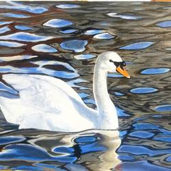 the swan, 26 x 20 inch, shankha mitra,26x20inch,canvas,wildlife paintings,photorealism paintings,acrylic color,GAL02246934637