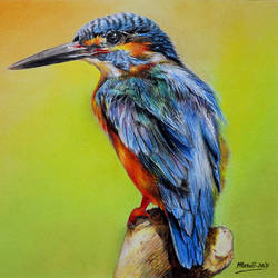 kingfisher, 14 x 10 inch, muralidhar suvarna,14x10inch,cartridge paper,drawings,photorealism drawings,realism drawings,paintings for dining room,paintings for living room,paintings for bedroom,paintings for office,paintings for kids room,paintings for school,pastel color,pencil color,paper,GAL0456934676