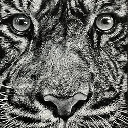 tiger closeup, 6 x 11 inch, muralidhar suvarna,6x11inch,thick paper,drawings,realism drawings,paintings for dining room,paintings for living room,paintings for bedroom,paintings for office,paintings for kids room,paintings for hotel,pen color,pencil color,GAL0456934677