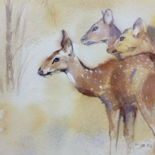 deer, 8 x 5 inch, akash kashid,wildlife paintings,paintings for living room,animal paintings,arches paper,watercolor,8x5inch,GAL012803481