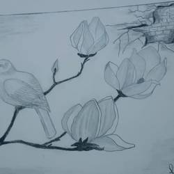 bird on tree, 12 x 9 inch, rimi ganguly,12x9inch,thick paper,drawings,paintings for living room,paintings for office,art deco drawings,fine art drawings,paintings for living room,paintings for office,graphite pencil,GAL02315634875