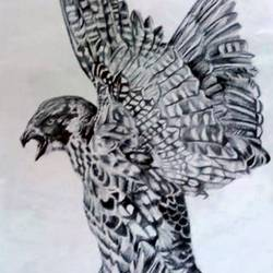 eagle realistic pencil sketch, 8 x 12 inch, sophiya mathew,8x12inch,paper,drawings,fine art drawings,photorealism drawings,paintings for living room,paintings for bedroom,paintings for hotel,graphite pencil,paper,GAL02319434894