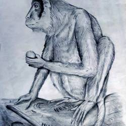 monkey realistic pencil sketch, 8 x 12 inch, sophiya mathew,8x12inch,paper,drawings,art deco drawings,photorealism drawings,paintings for dining room,paintings for living room,paintings for bedroom,paintings for hotel,graphite pencil,paper,GAL02319434895
