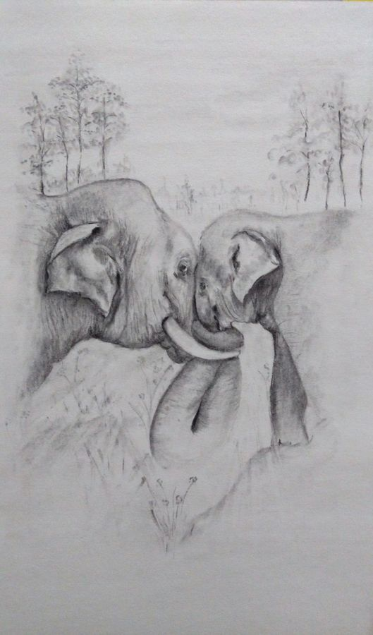 little trunk, 12 x 17 inch, arpana d,fine art drawings,paintings for living room,animal paintings,paper,charcoal,12x17inch,GAL09643506