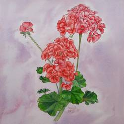 geranium, 11 x 14 inch, shraboni karan,11x14inch,cartridge paper,paintings,flower paintings,still life paintings,nature paintings | scenery paintings,realism paintings,love paintings,kids paintings,paintings for dining room,paintings for living room,paintings for hospital,watercolor,GAL02335135122