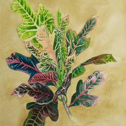 croton, 11 x 14 inch, shraboni karan,11x14inch,cartridge paper,paintings,flower paintings,still life paintings,nature paintings | scenery paintings,realism paintings,realistic paintings,love paintings,paintings for dining room,paintings for living room,paintings for bedroom,paintings for kids room,paintings for hotel,paintings for school,paintings for hospital,paintings for dining room,paintings for living room,paintings for bedroom,paintings for kids room,paintings for hotel,paintings for school,paintings for hospital,watercolor,paper,GAL02335135127